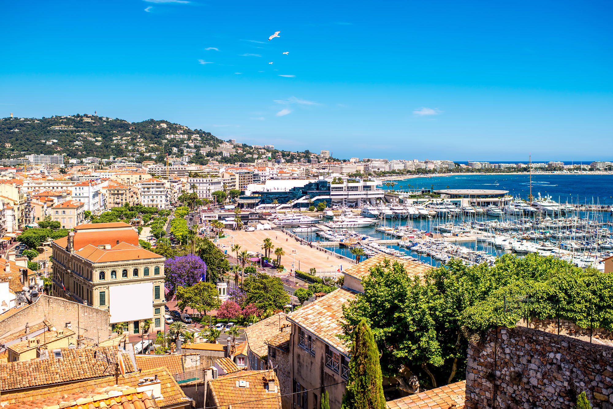 cannes-port-view